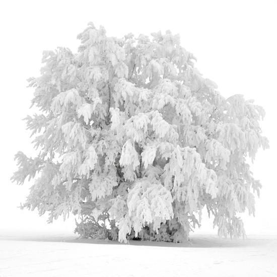 Not just white-Philippe Sainte-Laudy-Photographic Print