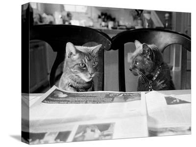 Not While I?m Reading-Kim Levin-Stretched Canvas Print