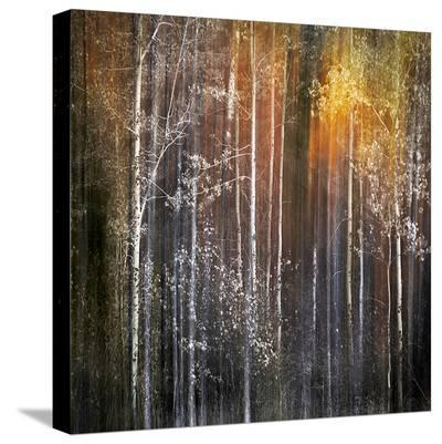 Nothing Gold Can Stay-Ursula Abresch-Stretched Canvas Print