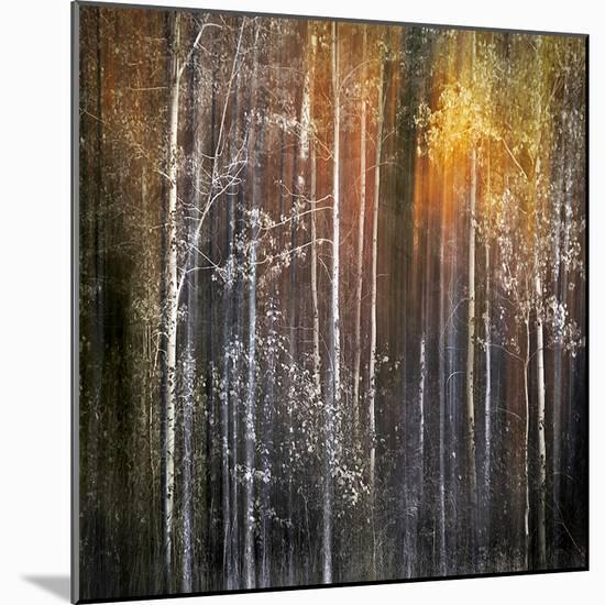 Nothing Gold Can Stay-Ursula Abresch-Mounted Photo
