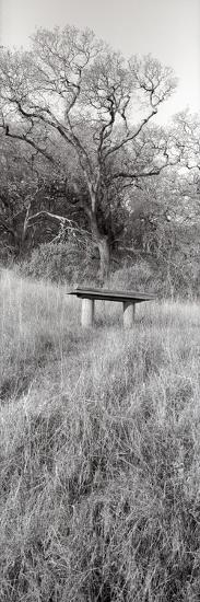 Novato Oak-Alan Blaustein-Photographic Print