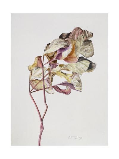 November Peony Leaves, 1999-Rebecca John-Giclee Print