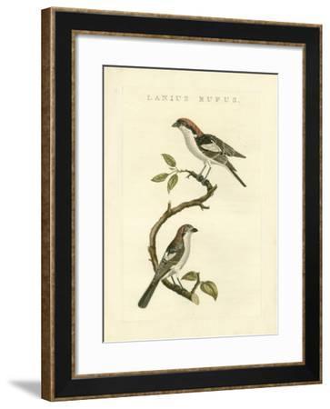 Nozeman Birds I-Nozeman-Framed Art Print