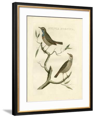 Nozeman Birds II-Nozeman-Framed Art Print