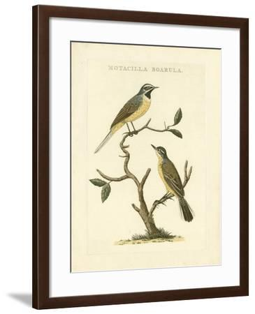 Nozeman Birds III-Nozeman-Framed Art Print