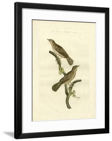 Nozeman Birds V-Nozeman-Framed Art Print