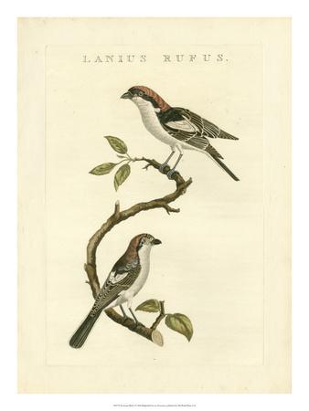 Nozeman Birds I