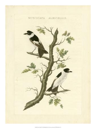 Nozeman Birds IV