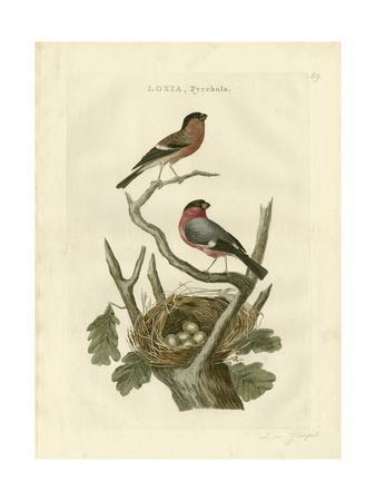 Nozeman Birds & Nests  I