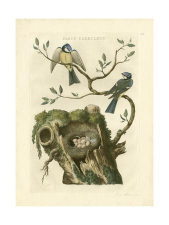 Nozeman Birds & Nests  III
