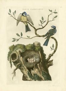 Nozeman Birds & Nests  III by Nozeman