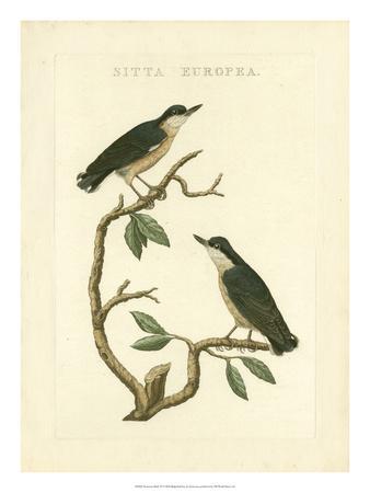 Nozeman Birds VI