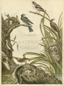 Sanctuary for Birds by Nozeman