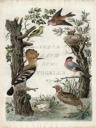 Woodpecker Sanctuary