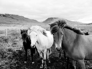 Farm Horses Black And White by NUADA