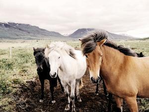 Farm Horses by NUADA
