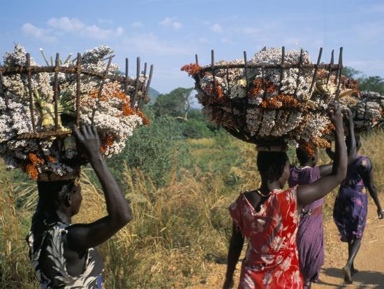 Nuer Women Carrying Sorghum, Gambella Region, Ilubador State, Ethiopia, Africa-Bruno Barbier-Photographic Print