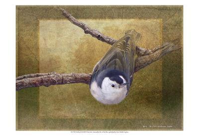 Nuthatch-Chris Vest-Art Print