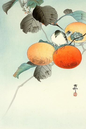 Nuthatcher Atop Persimmon-Koson Ohara-Giclee Print