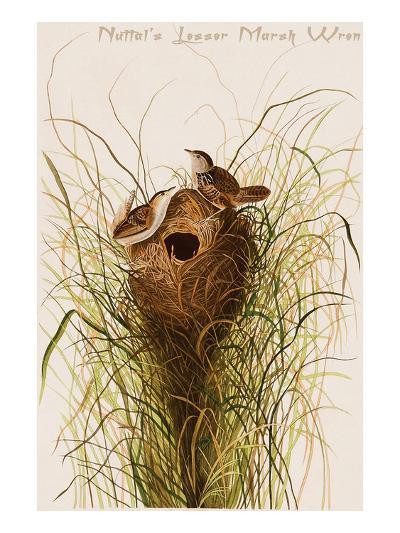 Nuttal's Lesser Marsh Wren-John James Audubon-Art Print