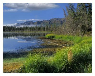 Nutzotin Mountains and boreal forest reflected in receding lake, Alaska-Tim Fitzharris-Art Print