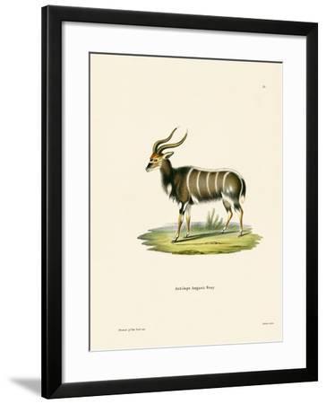Nyala--Framed Giclee Print