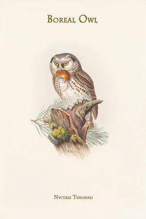 https://imgc.artprintimages.com/img/print/nyctale-tengmali-boreal-owl_u-l-pqph7j0.jpg?p=0