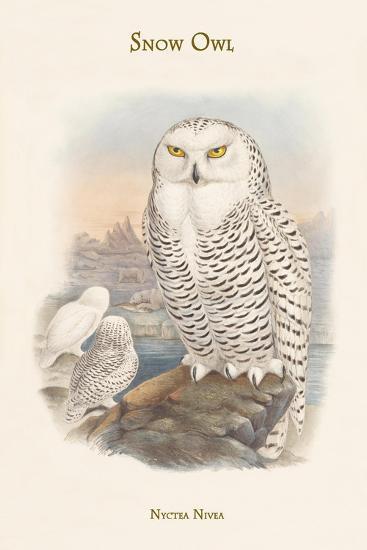 Nyctea Nivea - Snow Owl-John Gould-Art Print