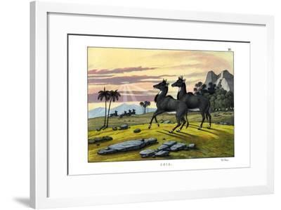 Nylghau, 1860--Framed Giclee Print