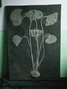 A Fossil of a Crinoid, a Type of Sea Lily That Lived in the Sea by O. Louis Mazzatenta