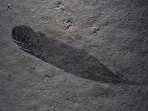 Earliest Known Bird Fossil Found in 1861 in the Bed of an Ancient Lagoon in Bavaria by O. Louis Mazzatenta