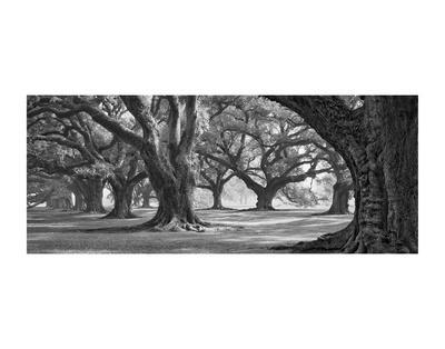 https://imgc.artprintimages.com/img/print/oak-alley-west-row_u-l-f8d1s50.jpg?p=0