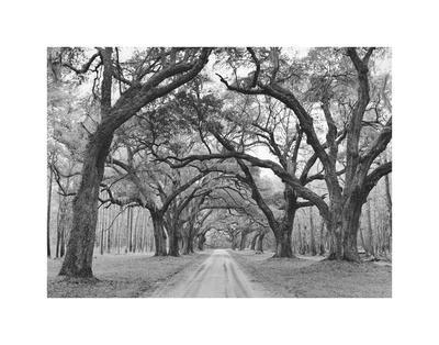 https://imgc.artprintimages.com/img/print/oak-arches_u-l-f8d1sc0.jpg?p=0