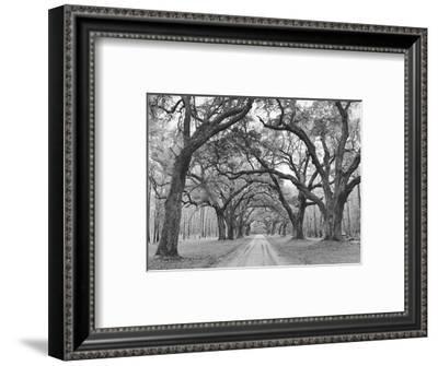 Oak Arches-Jim Morris-Framed Art Print