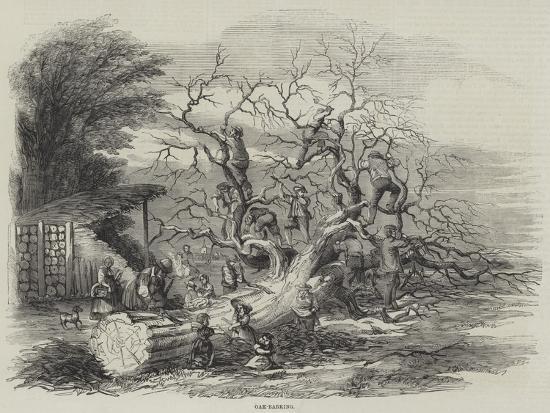 Oak-Barking--Giclee Print