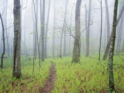 Oak Forest in Fog-James Randklev-Photographic Print