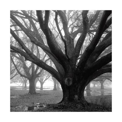 Oak Grove, Winter-William Guion-Photographic Print