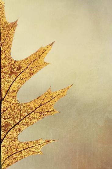 Oak Leaf II-Kathy Mahan-Photographic Print