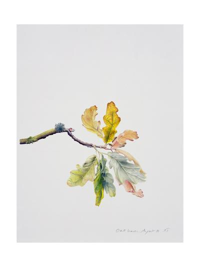 Oak Leaves, 2001-Rebecca John-Giclee Print