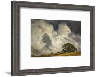 Oak's Embrace-David Lorenz Winston-Framed Art Print