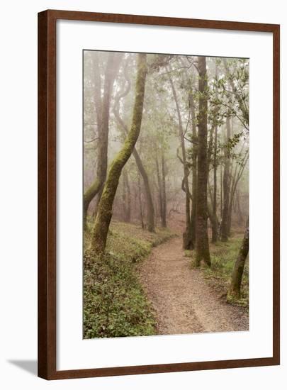 Oak Tree #22-Alan Blaustein-Framed Photographic Print