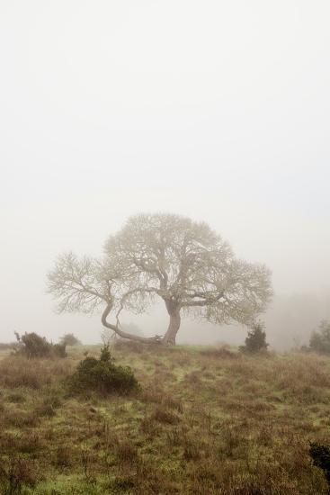 Oak Tree #26-Alan Blaustein-Photographic Print