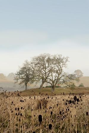 https://imgc.artprintimages.com/img/print/oak-tree-67_u-l-q1b8nek0.jpg?p=0