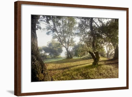 Oak Tree #70-Alan Blaustein-Framed Photographic Print