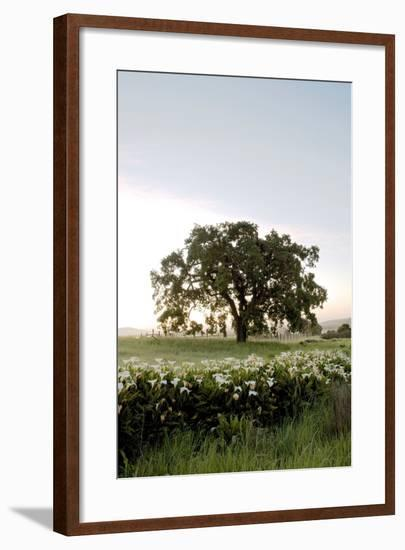 Oak Tree #84-Alan Blaustein-Framed Photographic Print