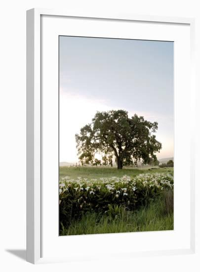 Oak Tree #84-Alan Blaustein-Framed Photographic Print