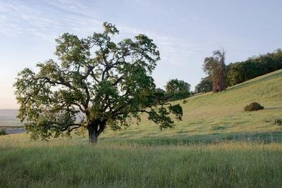 https://imgc.artprintimages.com/img/print/oak-tree-86_u-l-q1b8u4z0.jpg?p=0