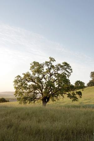 https://imgc.artprintimages.com/img/print/oak-tree-87_u-l-q1b8ubz0.jpg?p=0