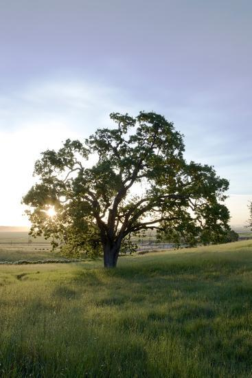 Oak Tree #95-Alan Blaustein-Photographic Print