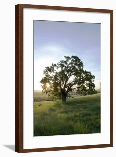 Oak Tree #95-Alan Blaustein-Framed Photographic Print